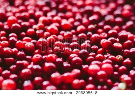 Natural Sweet Burgundy Red Wallpaper Of Berry Fresh Cranberries Cranberry Close-up