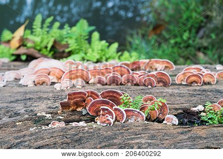 Close Up Shot Of Mushroom On Timber Wood