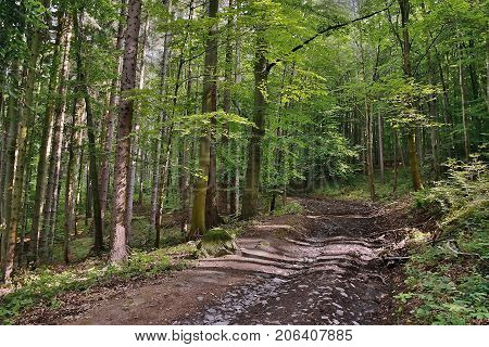 Forest Path Leading To Bucina Lookout  In Noon Sunshine At Beginning Of Autumn In West Bohemia