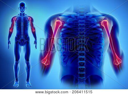 3D Illustration Of Humerus, Medical Concept.