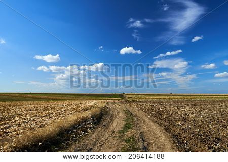 Agricultural Road Through Fields