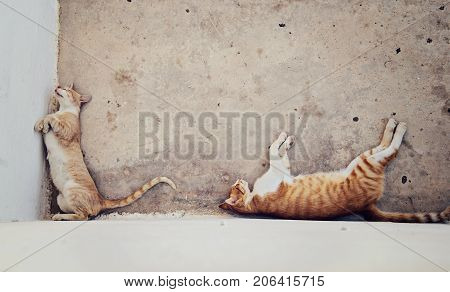 Two homeless red haired cats sleeping in the shade of the house copy space