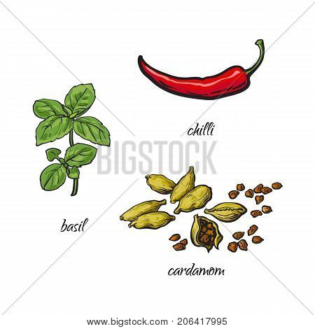 vector flat cartoon sketch hand drawn Spices, seasoning, flavorings and kitchen herbs set. Basil leaves with stem, cardamom and red chili pepper. Isolated illustration on a white background