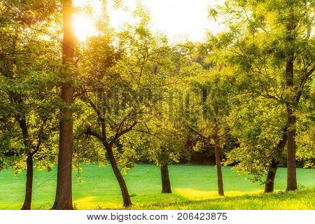 Summer Trees On Hill In Washington Dc Park During Sunset With Sun Burst Or Glade And Rays In 23Rd An
