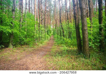 path passing through green dense forest summer