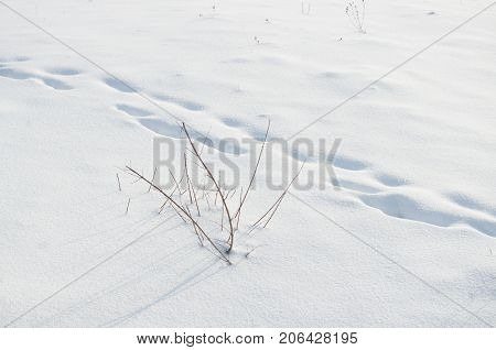 footprints in deep snow in field. Winter landscape