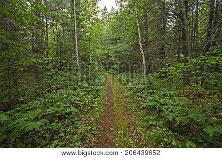 Quiet Path in a Sylvan Landscape in Chutes Provincial Park in Ontario