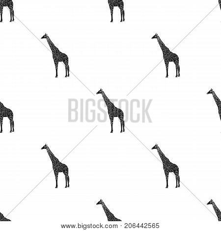 Giraffe is the highest land animal. A wild animal, a giraffe single icon in black style vector symbol stock illustration .