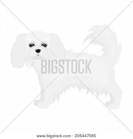 Spaniel, single icon in monochrome style.Spaniel vector symbol stock illustration .
