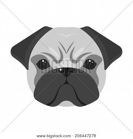 Breed of a dog, a pug.Pug's muzzle single icon in monochrome style vector symbol stock illustration .