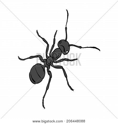 The hymenopteran insect is an ant.Arthropod animal ant single icon in monochrome style vector symbol stock isometric illustration .