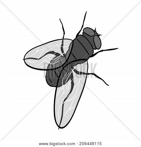 The fly is ordinary.Dipterous insect fly single icon in monochrome style vector symbol stock isometric illustration .