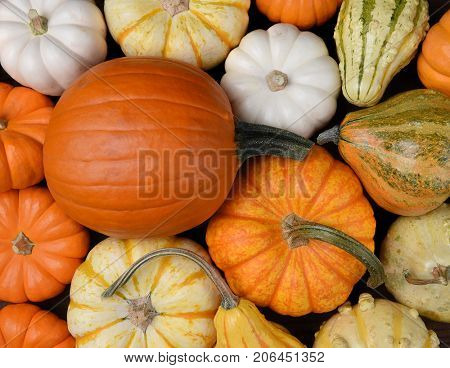 Overhead view of a group of assorted Autumn pumpkins, gourds and squash.