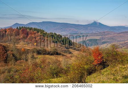 Autumn Forest On Hill In High Mountains