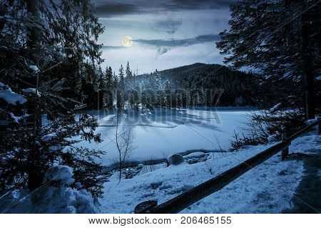 Spruce Forest On Winter Night In Full Moon Light