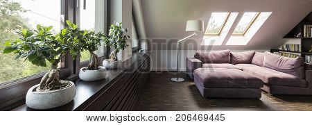 Room In Attic