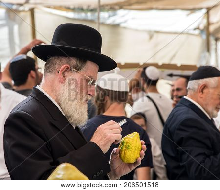 JERUSALEM, ISRAEL - OCTOBER 16, 2016: Elderly ortodox Jew with white beard is checking with lupa ritual plant etrog - citrus. Traditional market before the holiday of Sukkot