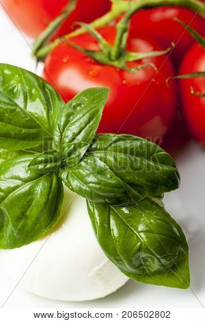 closeup of mozarella and basil and tomatoes