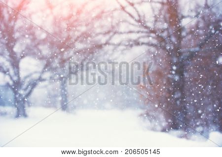 Blurred christmas background with trees, falling snow at sunny day