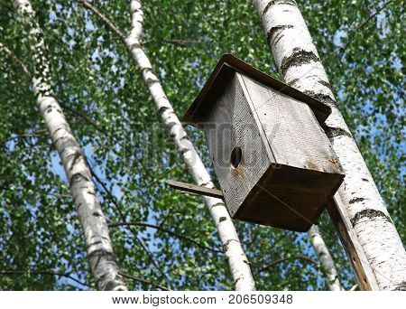 Wooden nesting box hanging on the birch tree