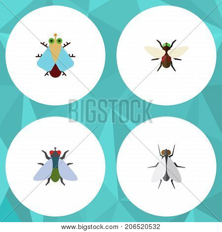 Flat Icon Housefly Set Of Hum, Fly, Tiny And Other Vector Objects
