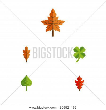 Flat Icon Maple Set Of Linden, Leafage, Hickory And Other Vector Objects
