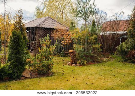 late autumn garden view with wooden shed and conifers. November in country.