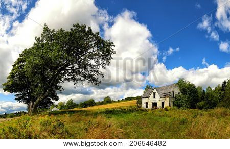 Abandoned house framed by a mature tree in a rural setting on a summer day