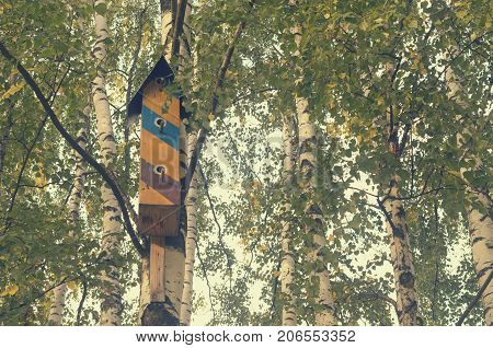Beautiful colorful houses for birds on birches