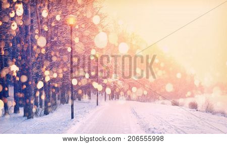 Snowflakes on winter park background. Snowfall in park. Frosty winter sunset. Christmas background.