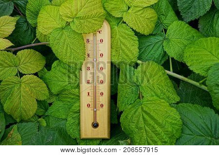 brown wooden thermometer in green bush leaves
