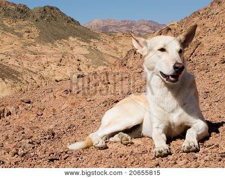 Ruhelosigkeit Hund in den Bergen