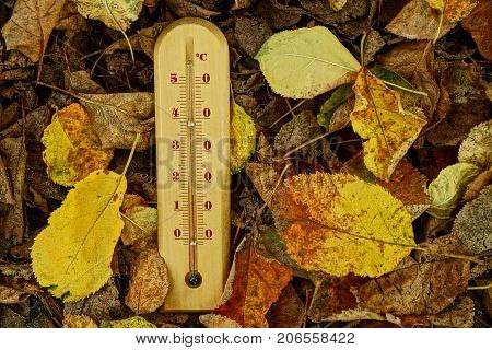 A wooden thermometer on dry fallen autumn leaves