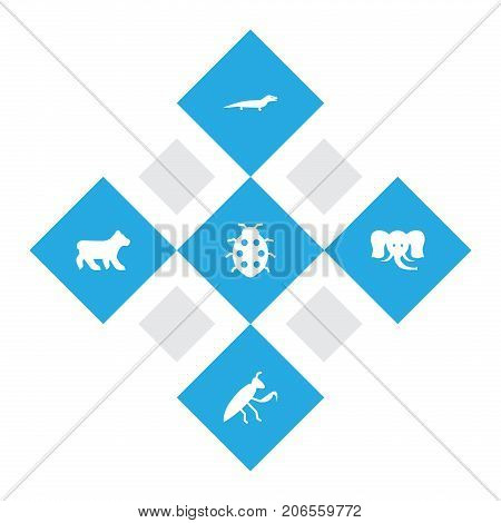 Collection Of Beetle, Trunked Animal, Grasshopper And Other Elements.  Set Of 5 Zoo Icons Set.
