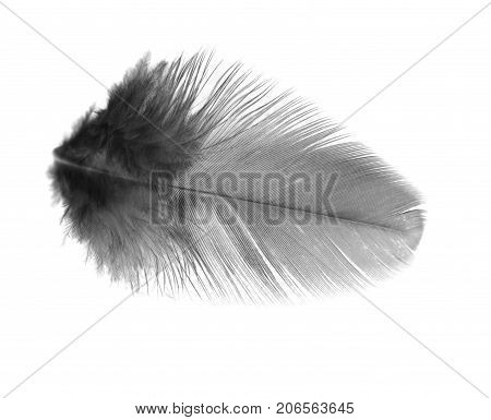 Black feather on a white background . . Photos in the studio
