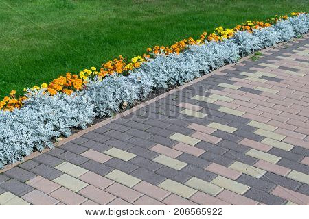 Paving pattern with rectangular shape and brown color. Along paved walkways planted flowerbed with beautiful orange and yellow flowers. In the background lawn with green grass.