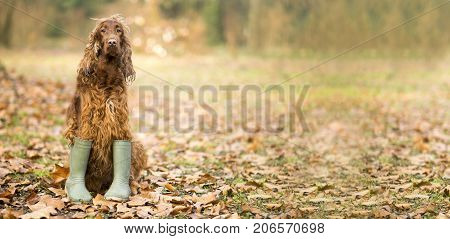 Website banner background of a funny dog in the autumn leaves