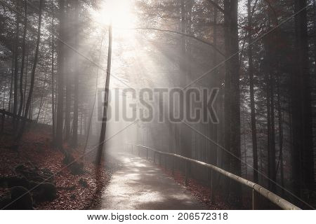 Endless road crossing a dark forest in autumn colors shrouded by mist and enlightened by sun rays in Fussen Germany.