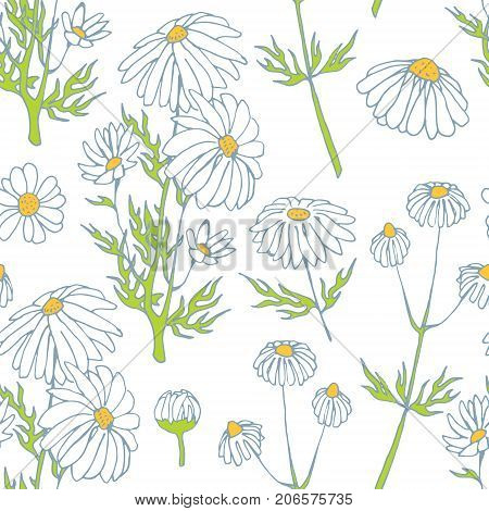 camomile hand drawn seamless pattern vector sketch