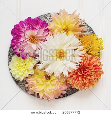 Various types of dahlias arranged on a pewter colored plate.