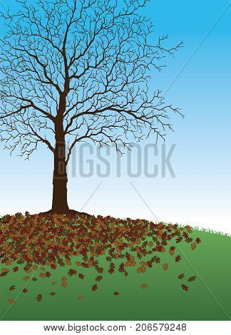 Tree With Fallen Leaves is a fall or autumn illustration of a beautiful tree where all of it's leaves have fallen around it. There is also green grass and a blue sky background.