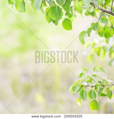 Green leaves in the sunlight background