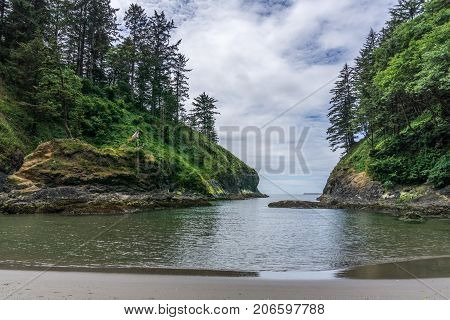 Pacific Ocean Cove With Tall Trees On The Cliff.