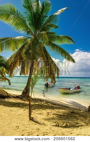 Amazing palm tree on caribbean beach with boat on the background, Dominican Republic, Caribbean Islands, Central Ameryka