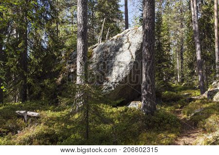 Huge boulders in a primeval forest, late seral forest. Path and signs.