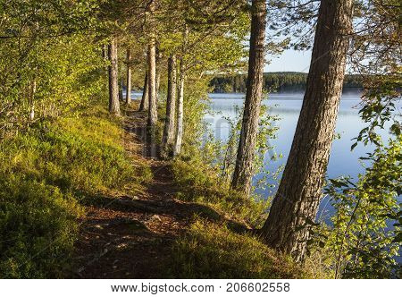 Trail, path by a lake. Pine and forest in the background.