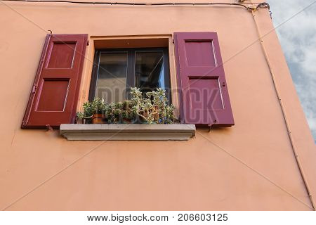 Pots with plants on the window with open shutters