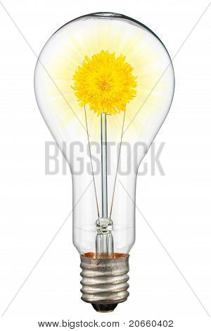Light Of Nature, Dandelion, Shining