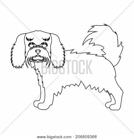 Spaniel, single icon in outline style.Spaniel vector symbol stock illustration .