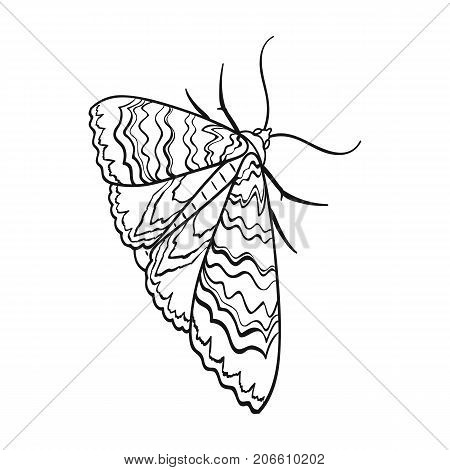 Moth, night butterfly. Insect pest moth single icon in outline style vector symbol stock isometric illustration .